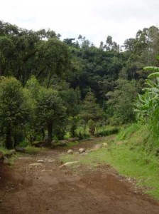 On the trail above Machame